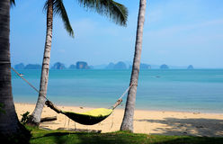 Hammock hanging between palm trees on beach Stock Photography