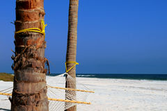 Hammock Hanging Between Palm Trees With Blue Sky Stock Image