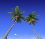 Hammock hanging from palm trees Royalty Free Stock Photography