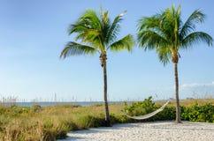 Hammock hanging between tall palm trees Royalty Free Stock Photos