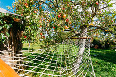 Free Hammock Hanging Under Apple Tree With Red Apples In Yard Of The Rural House. Royalty Free Stock Photos - 85652898