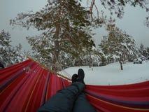 Hammock hanging in winter forest. Ukraine. winter, picnic, rest hammock pine royalty free stock photography