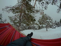 Hammock hanging in winter forest. Ukraine. winter, picnic, rest hammock pine stock image