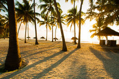 Hammock, huts and palm trees Stock Photography