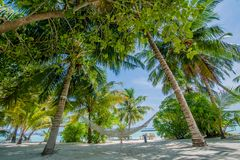 Hammock at the beautiful tropical beach Stock Photography