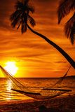 Hammock on a palm tree during beautiful sunset on tropical Fiji royalty free stock image