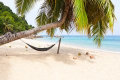 Hammock palm tree tropical beach island. White sand blue water coconuts Royalty Free Stock Images