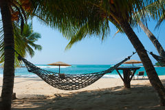 Hammock between palm trees Stock Image