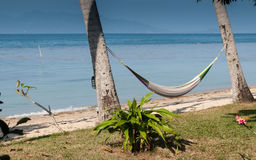 Hammock between palm trees Royalty Free Stock Photos