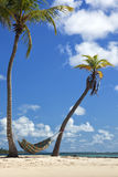 Hammock between palm trees on the beach Stock Photos