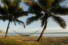 Hammock between palm trees, Fiji Stock Image