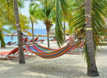 Hammock on palm trees royalty free stock images