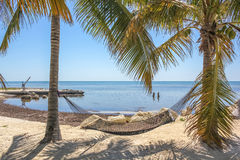 Hammock between palm trees Stock Images