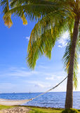 Hammock between palm trees and the sea Stock Image