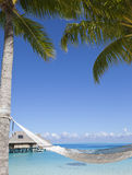 Hammock between palm trees and the sea. In a sunny day Stock Photo