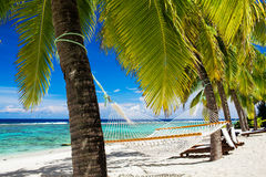 Hammock between palm trees on tropical beach Royalty Free Stock Photo