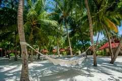 Hammock between palm trees at the tropical beach Stock Photography