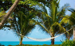 Hammock between palm trees Royalty Free Stock Images
