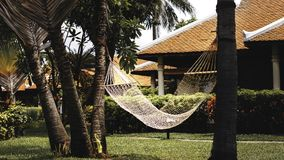 Hammock among the palms in the garden stock photo