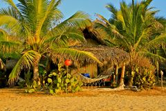 Palms, hammock, Pacific Ocean, Mexico Stock Image