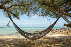 Hammock in the shades of palm trees on the beach Stock Photo