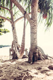 Hammock on sunny beach between two palm trees Royalty Free Stock Image