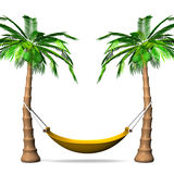 Hammock On Tall Palm Trees Front View Stock Image
