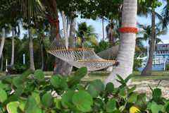 Hammock in Tranquil Tropical Setting Stock Image