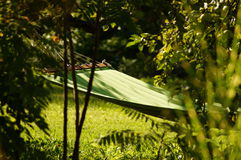 Hammock on tree between trees in evening time in spring Stock Images
