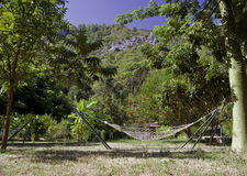 Hammock on tropic lawn. Hammock among tropic trees and palms with a remote mountain on the background Royalty Free Stock Photo