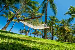 Hammock on tropical beach. Under palms and blue sky Stock Photo