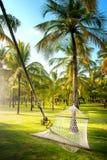 Hammock in tropical coconut palm grove Stock Photos