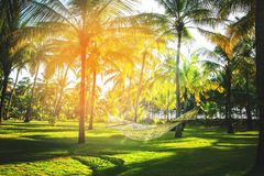 Hammock in tropical coconut palm grove Royalty Free Stock Images
