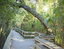 Hammock tropicale del legno duro Fotografia Stock Libera da Diritti