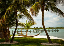 Hammock between two palm trees on the beach. Stock Image