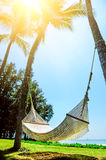 Hammock between two palm trees on the beach Stock Photos