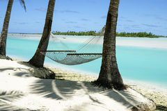 Hammock between two palm trees. Royalty Free Stock Photography