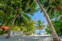 Hammock between two palm trees at the tropical beach Stock Photography