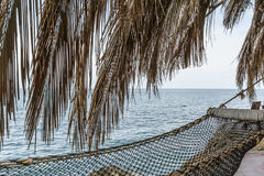 Hammock under palm branches Stock Image