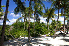 Hammock under Palm Trees Royalty Free Stock Photography