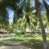 Hammock under palm trees Royalty Free Stock Image