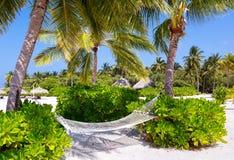 Hammock under palm trees Stock Photos