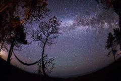 Hammock under the trees with beautiful milky way and stars in ba Stock Images