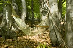 Hammock in the Woods Royalty Free Stock Photo