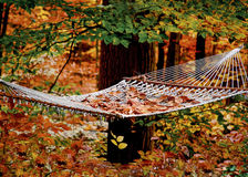 Hammock in the woods. Brilliant autumn leaves are falling around this hammock in the forest Royalty Free Stock Image