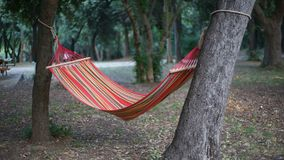 Hammock in the woods Stock Image