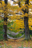 Hammocks Between Autumn Trees. Hammocks Between trees with leaves changing color in the fall Stock Photography