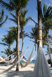 Hammocks on the beach Royalty Free Stock Image
