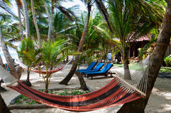 Hammocks and lounger in a Resort Under Coconut royalty free stock photography
