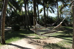 Hammocks between palms Royalty Free Stock Photos